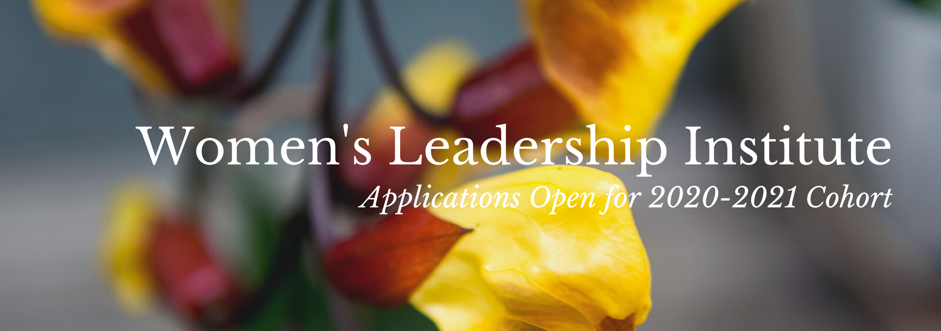 """A maroon and gold flower in soft focus provides the background of the image, with white text against the background that reads, """"Women's Leadership Institute, Applications Open for 2020-2021 Cohort"""""""